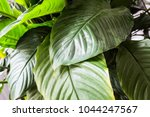 green leafs  plant in nature... | Shutterstock . vector #1044247567