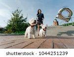 beautiful woman walking two... | Shutterstock . vector #1044251239
