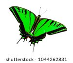Small photo of Two-tailed swallowtail butterfly, Papilio multicaudata, isolated on white background. The largest of the US tiger sawllowtails, this one has even three tails on each wing. Color change to lawn green