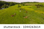 cows graze on the meadow. the...   Shutterstock . vector #1044263614