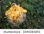 chanterelle mushroom nature   Shutterstock . vector #1044281851