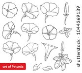 Vector Set With Outline Petuni...