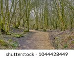 Woodland Path At Marsden  West...