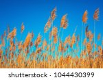 golden reeds against sun and... | Shutterstock . vector #1044430399