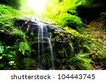 Sunny Rain Forest With Small...