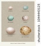 nature poster of illustrated... | Shutterstock .eps vector #1044443125