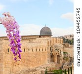 Blossoming flower against a mosque in the Old city of Jerusalem. Israel - stock photo