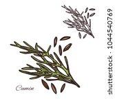 cumin seasoning plant sketch...   Shutterstock .eps vector #1044540769