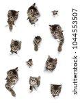 cats in holes of paper  little... | Shutterstock . vector #1044553507