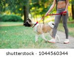 sports woman walking with dog... | Shutterstock . vector #1044560344