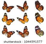 Stock photo beautiful monarch butterfly collection isolated on white background 1044591577
