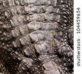 crocodile skin texture with... | Shutterstock . vector #104459654