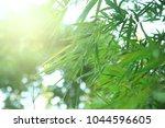 bamboo leaves sunlight ...   Shutterstock . vector #1044596605
