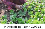 vegetables organic and... | Shutterstock . vector #1044629311