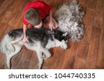 concept of spring moulting dogs.... | Shutterstock . vector #1044740335