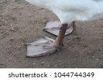 close up shot of swan legs in a ... | Shutterstock . vector #1044744349