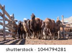 a herd of mongolian camels in... | Shutterstock . vector #1044794281