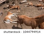 herd of foals waiting for... | Shutterstock . vector #1044794914