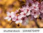 pink cherry blossom  japanese... | Shutterstock . vector #1044870499
