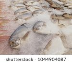 many fishes in iced for sale at ... | Shutterstock . vector #1044904087