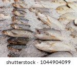 many fishes in iced for sale at ... | Shutterstock . vector #1044904099