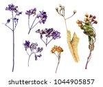 top view of pressed wild... | Shutterstock . vector #1044905857