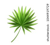 realistic tropical palm leaf... | Shutterstock .eps vector #1044919729