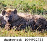 a young fluffy spotted hyena ... | Shutterstock . vector #1044932755