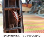 the haelequin cockroach has... | Shutterstock . vector #1044990049