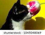 cat sniffing pink flower ... | Shutterstock . vector #1045048069