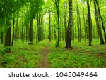 beautiful green forest in spring | Shutterstock . vector #1045049464