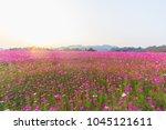 soft focus  beautiful flower... | Shutterstock . vector #1045121611