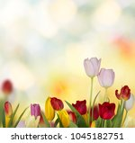 colorful fresh spring tulips... | Shutterstock . vector #1045182751