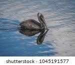 Pelican  Views Around The...