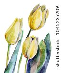 watercolor yellow tulips on a...   Shutterstock . vector #1045235209