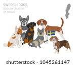 dogs by country of origin.... | Shutterstock .eps vector #1045261147