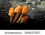 Group Of Mushrooms In The Forest