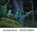common polypody  polypodium...   Shutterstock . vector #1045276864