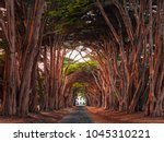 stunning cypress tree tunnel at ... | Shutterstock . vector #1045310221