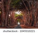 Stunning Cypress Tree Tunnel A...