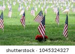 American Flags At A Veterans...