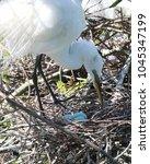 a mother egret will get up...   Shutterstock . vector #1045347199