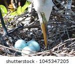 closeup of mother egret...   Shutterstock . vector #1045347205
