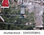 House Finch Eating From A Bird...