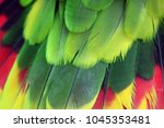 Small photo of Amazona brasiliensis feathers