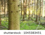 Trunk Of A Beautiful Tree In A...
