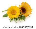 marigold flowers isolated on... | Shutterstock . vector #1045387639