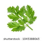 parsley leaf isolated without... | Shutterstock . vector #1045388065