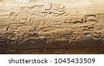 wood log surface texture | Shutterstock . vector #1045433509