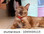 cat on floor | Shutterstock . vector #1045434115